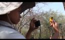Researching the Charming Vitelline Masked Weaver Bird