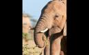 Wounded Elephant Finds Safe Haven
