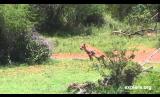 Diversity of Wildlife Action