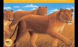 NKCC Reading Corner: Here is the African Savanna