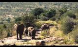 Elephant Highlights