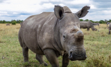 Sudan: Earth's Last Male Northern White Rhino