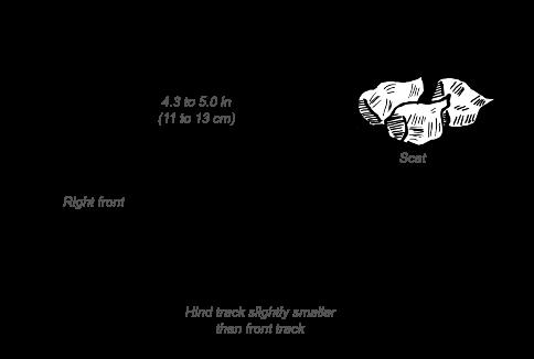 Beisa Oryx tracks