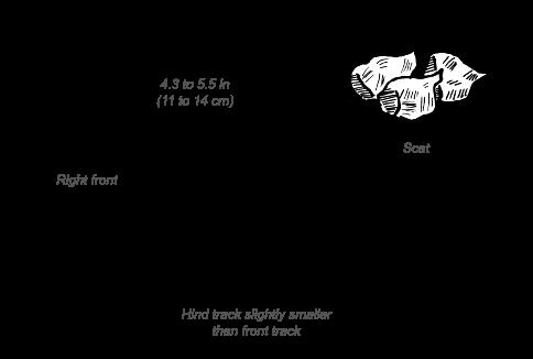 Common Eland tracks