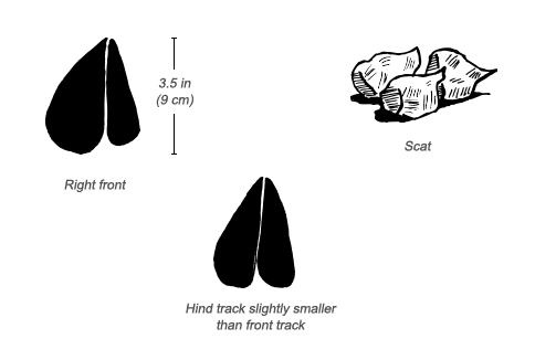 Defassa Waterbuck tracks