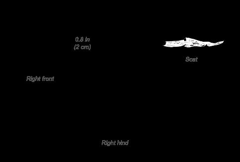 Common Genet tracks