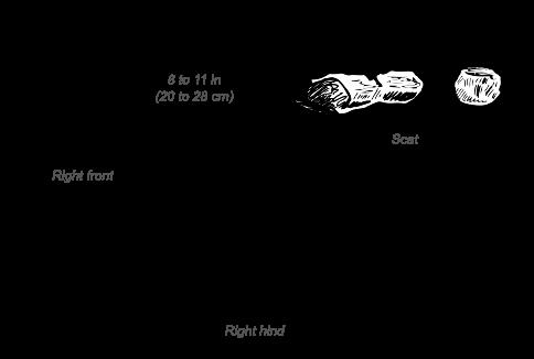 White Rhinoceros tracks